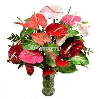 Bouquet Giacomo Casanova
