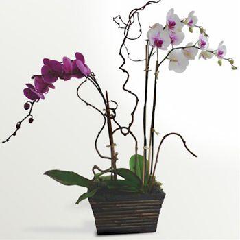 Bouquet Orchid Arrangement