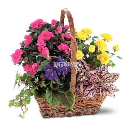 Bouquet Сolor fiesta