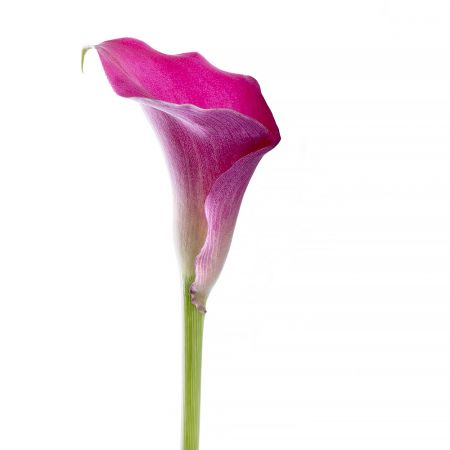 Bouquet Pink Calla piece